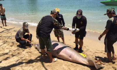 25 year old dugong washes ashore in Krabi | The Thaiger