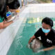 Phuket marine vets report on the progress of dugong calf 'Yamil' | The Thaiger