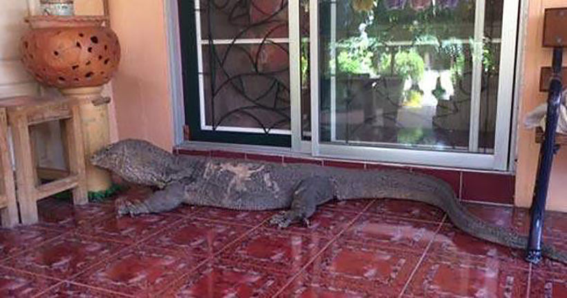What did this Bangkok homeowner find on their couch? | News by Thaiger