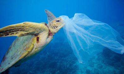 Calls for total ban on use of single-use plastic bags | Thaiger