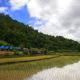 Rice traders blame strength of Thai baht for hurting exports | Thaiger