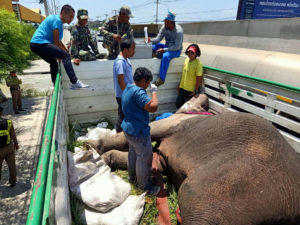 7 year old elephant dies after being hit by truck   News by Thaiger