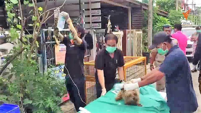 Four dogs rescued in north of Bangkok after being starved for a month | Thaiger
