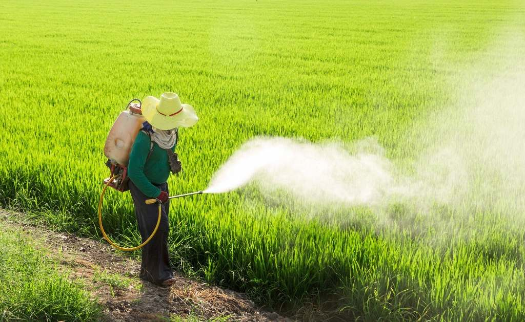 Thai farmers reluctant to scale down use of 'toxic' herbicides | Thaiger