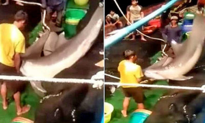 Thai fisherman admit to killing up to 30 dolphins | Thaiger