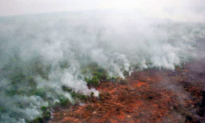 Indonesia's forest fires causing air pollution in southern Thailand | The Thaiger