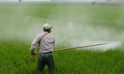 Ban of 3 herbicides agreed, with conditions | Thaiger