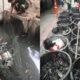 Bangkok sewage water home to all sorts | Thaiger