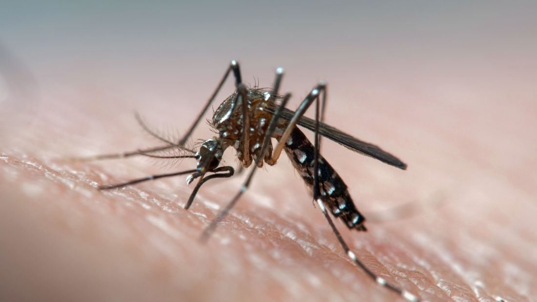 Dengue fever surges 400% in Northern Thailand province compared to 2019 | Thaiger