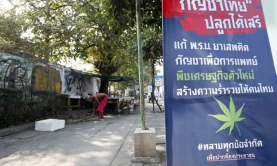 Proposal: New law that will allow six cannabis plants per Thai household | Thaiger
