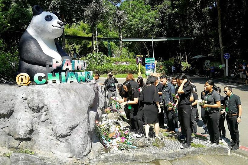 Chinese netizens want to know what caused panda Chuang Chuang's death
