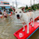 Thai PM insists government flood victims aren't being ignored | Thaiger