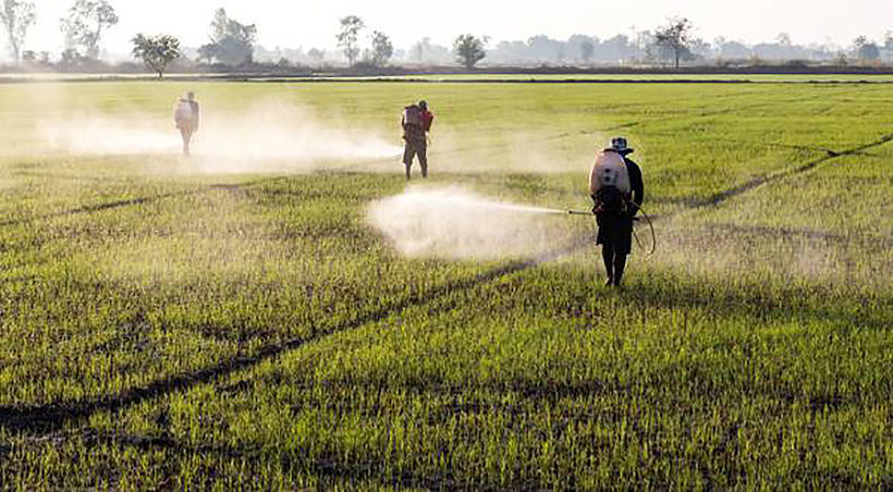 Anti-corruption body calls for transparency over controversial herbicides decision | News by Thaiger