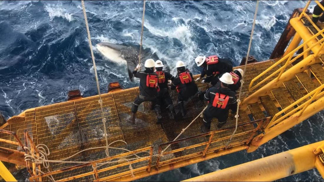 Whale freed by drilling team in Gulf of Thailand | News by Thaiger