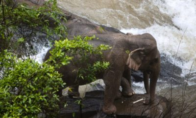 5 more dead elephants located by drone at Khao Yai park waterfall | Thaiger