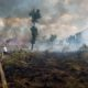 Indonesia's burning issue – controlling the palm oil giants | The Thaiger