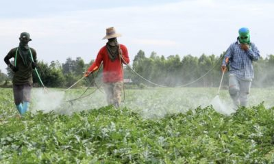 Farmers seek injunction on chemical ban   The Thaiger