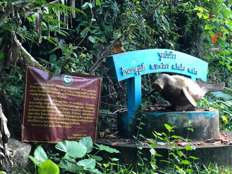 21st dugong found dead in fish nets off Phang Nga | News by Thaiger