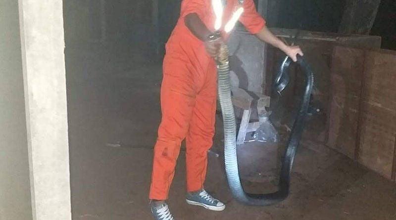 King cobra pops up at Korat night market | News by Thaiger