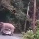 Elephant chooses bad time for a lie down in Khao Yai national park | Thaiger