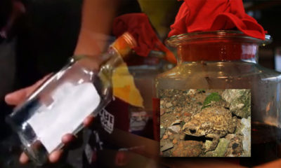 One dead, three in coma, ten seriously ill after drinking moonshine mixed with poisonous toad blood in Chonburi | Thaiger