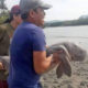 Dr. Thon pleads for dugong conservation plan | The Thaiger