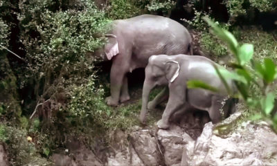 Drones used to find two elephants stuck in the Haew Narok ravine | Thaiger