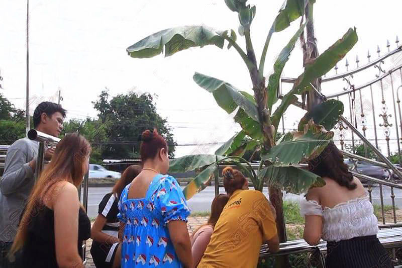 Thais go bananas over freak plants in pursuit of lottery numbers