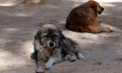 "Cambodian dog slaughterhouse shut down, owner says he is ""ashamed"" 