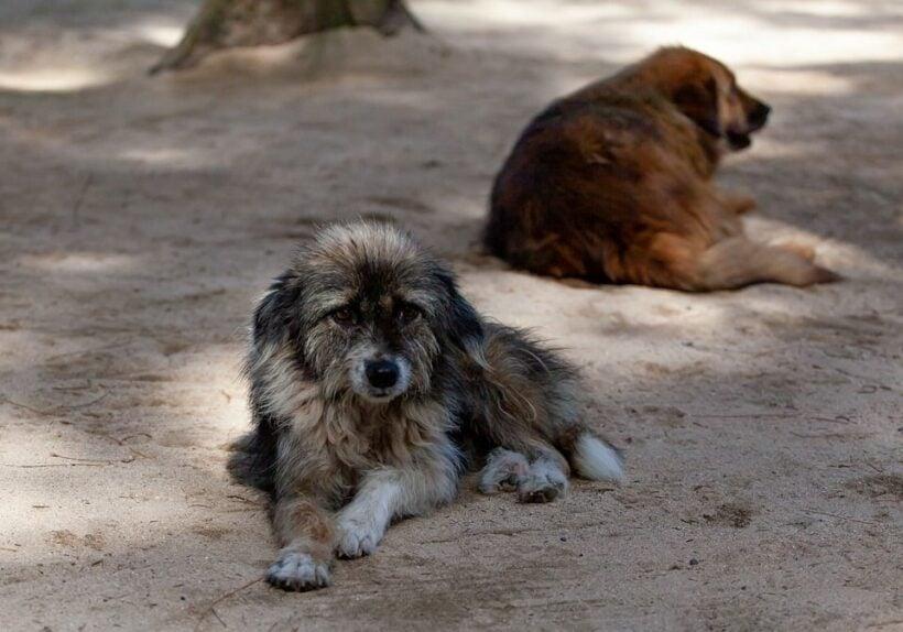 "Cambodian dog slaughterhouse shut down, owner says he is ""ashamed"" | Thaiger"