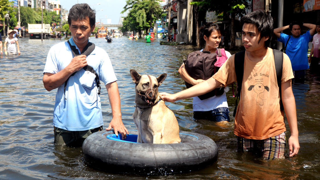 Soi Dog assisting displaced animals in flood-ravaged north east Thailand | News by Thaiger