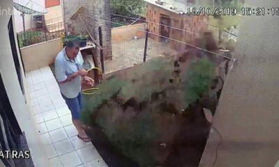 Brazil: Làm nổ tung khu vườn khi diệt gián | The Thaiger