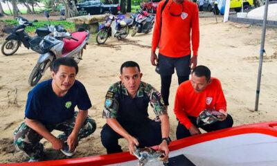 Sea turtles saved at Phuket's Naithon Beach   The Thaiger