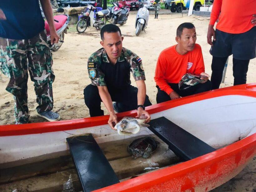 Sea turtles saved at Phuket's Naithon Beach | News by Thaiger