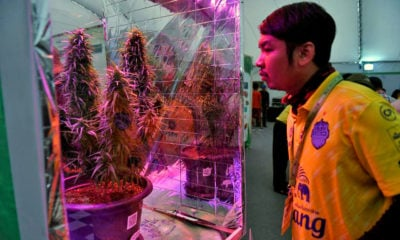 Thai government might buy private pot – Health Minister | Thaiger