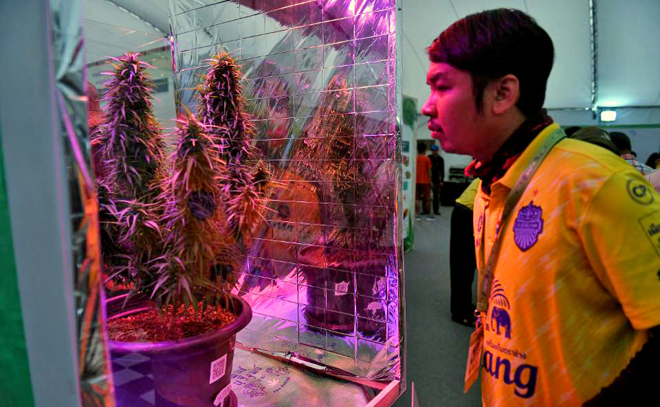 Thai government might buy private pot – Health Minister | The Thaiger