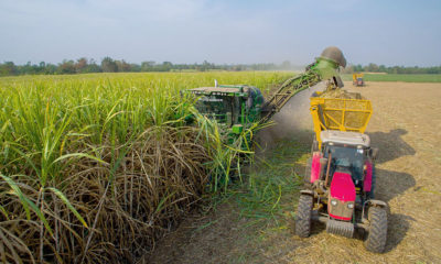 Health Minister insists chemical ban must stay, as farmers plead for compromise | Thaiger