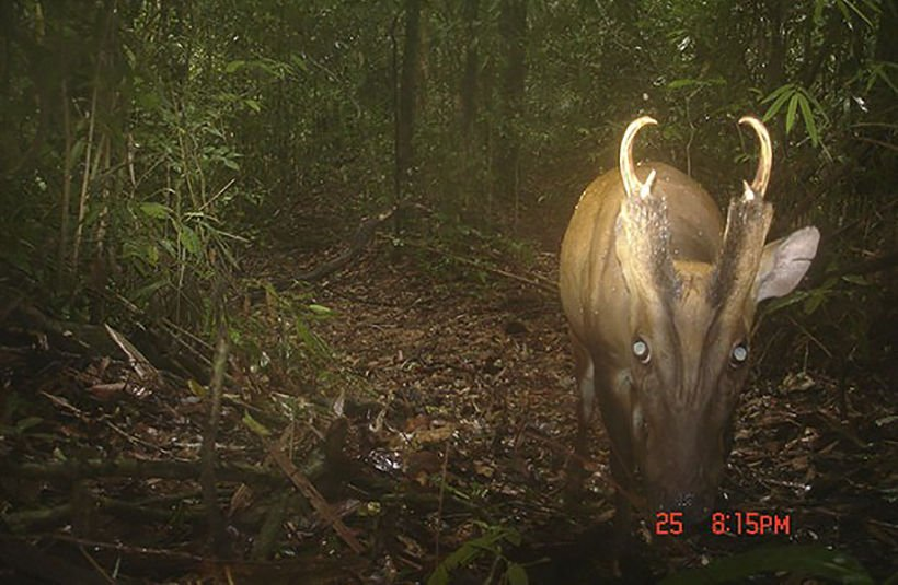 More rare and endangered species found in southern Thailand