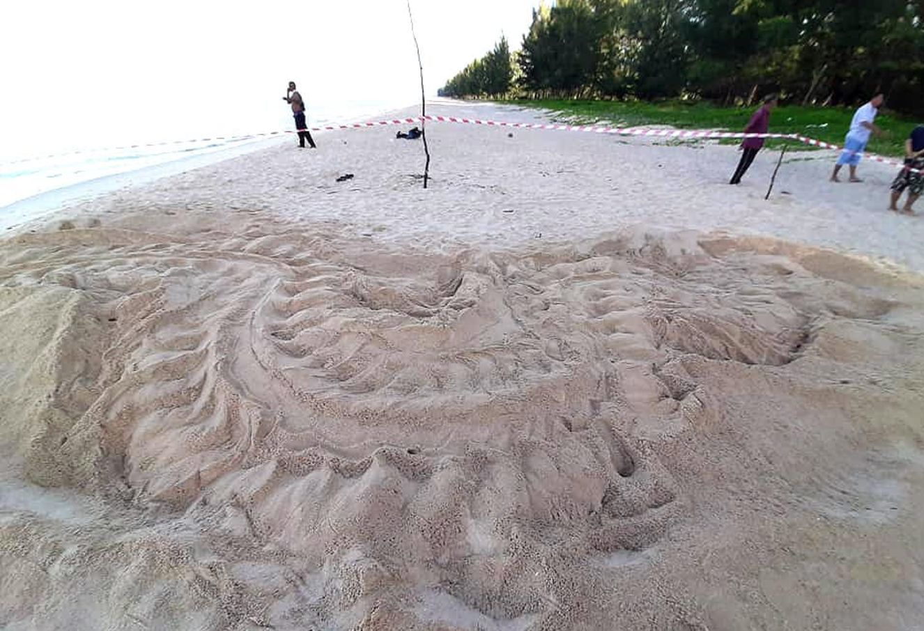 Another leatherback sea turtle lays eggs in Phang Nga | News by Thaiger