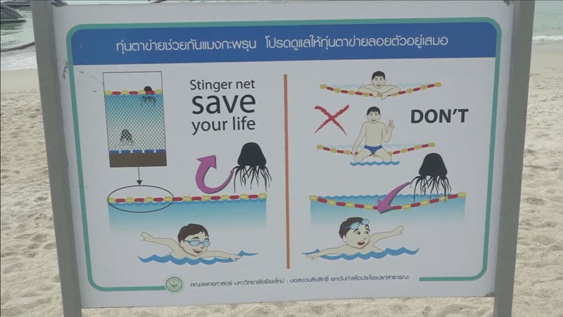 Russian 10 year old survives stings from box jellyfish on Koh Samui | News by Thaiger