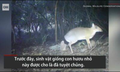 Khánh Hòa: Cheo cheo lưng bạc xuất hiện tại Việt Nam sau 3 thập kỷ   Thaiger