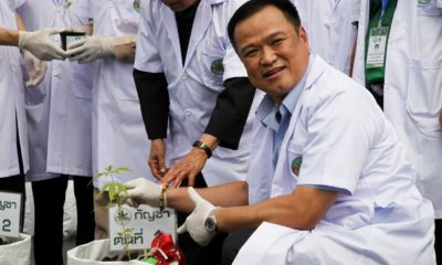 Health Minister proposes Thai farmers to grow cannabis as preferred crop | The Thaiger