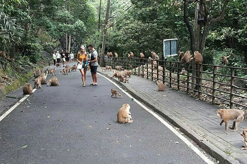 Russian tourist bitten by a monkey on To Sae Hill, Phuket town