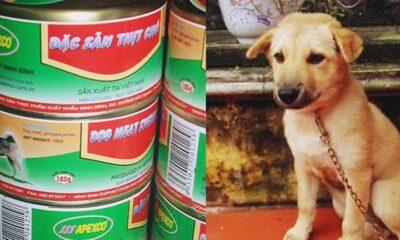 Sự thật hình ảnh thịt chó đóng hộp được sản xuất tại Ninh Bình gây bức xúc   The Thaiger