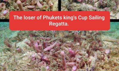 Phuket King's Cup regatta organisers deny allegations of coral destruction at Kata | Thaiger