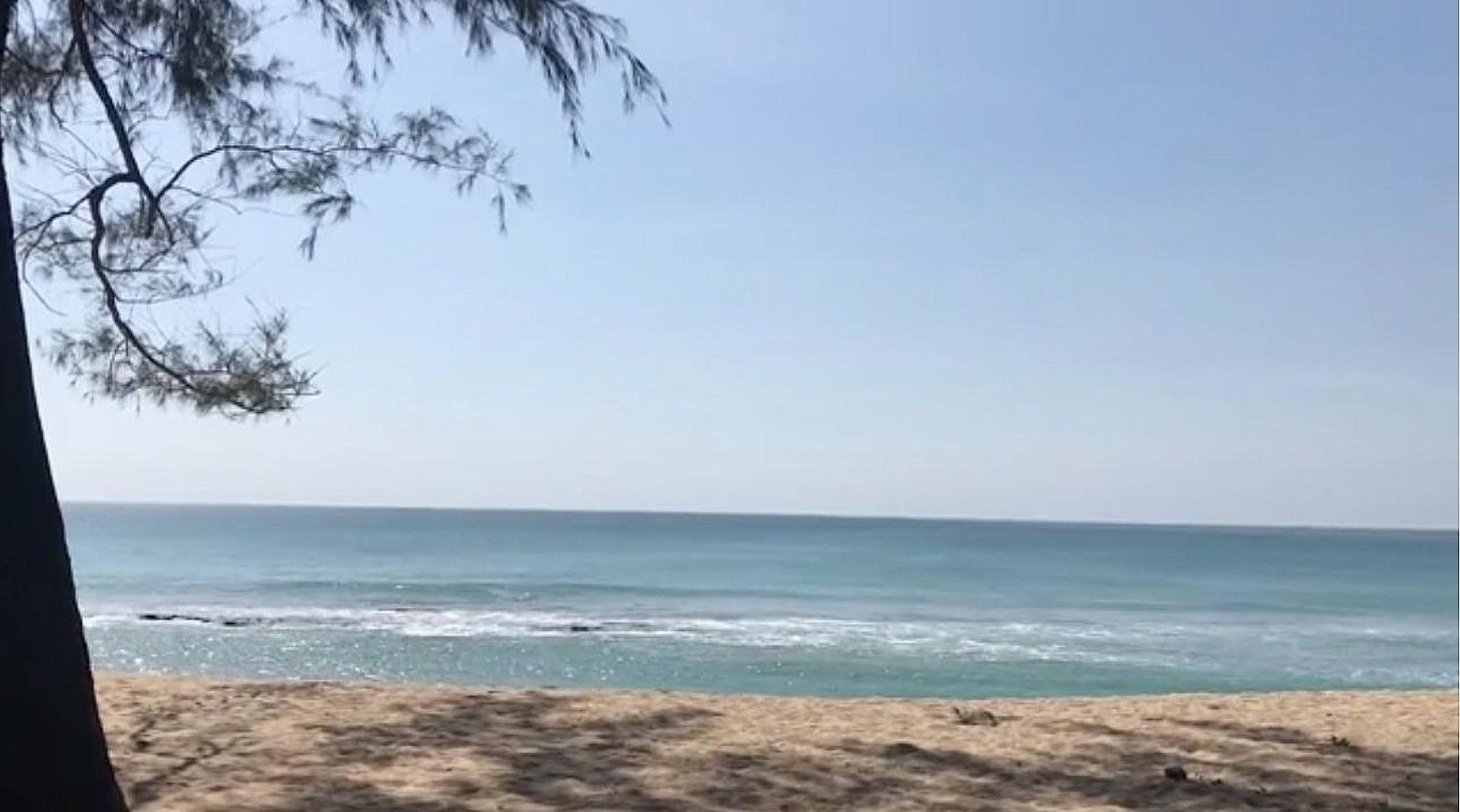 Mother cat and 4 kittens poisoned at Sai Kaew Beach, Phuket   News by Thaiger