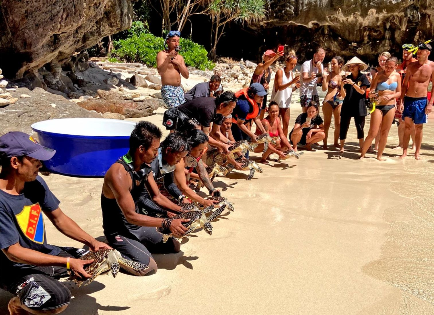 Turtle release at Maya Bay to commemorate the 15th anniversary of the Tsunami   News by Thaiger