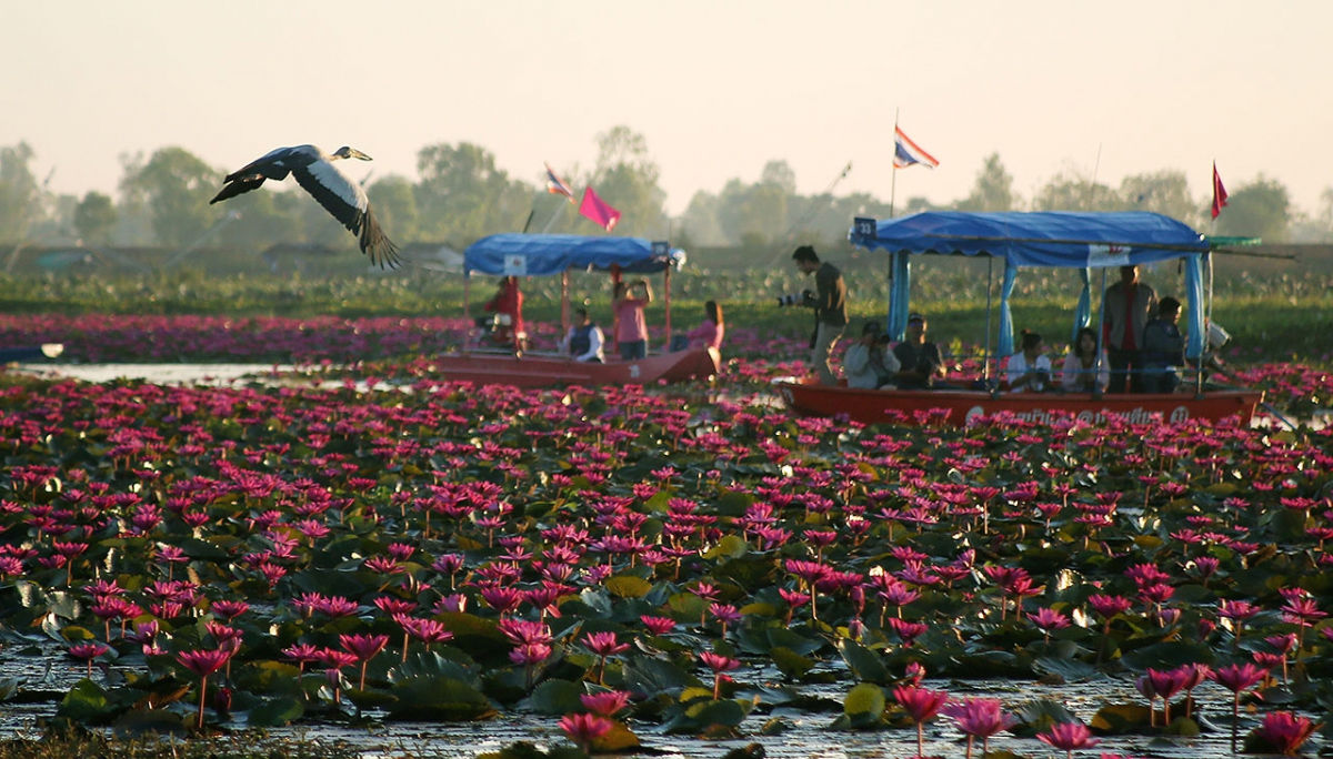 Tourists head to the spectacular Red Lotus Lake in Udon Thani | News by Thaiger