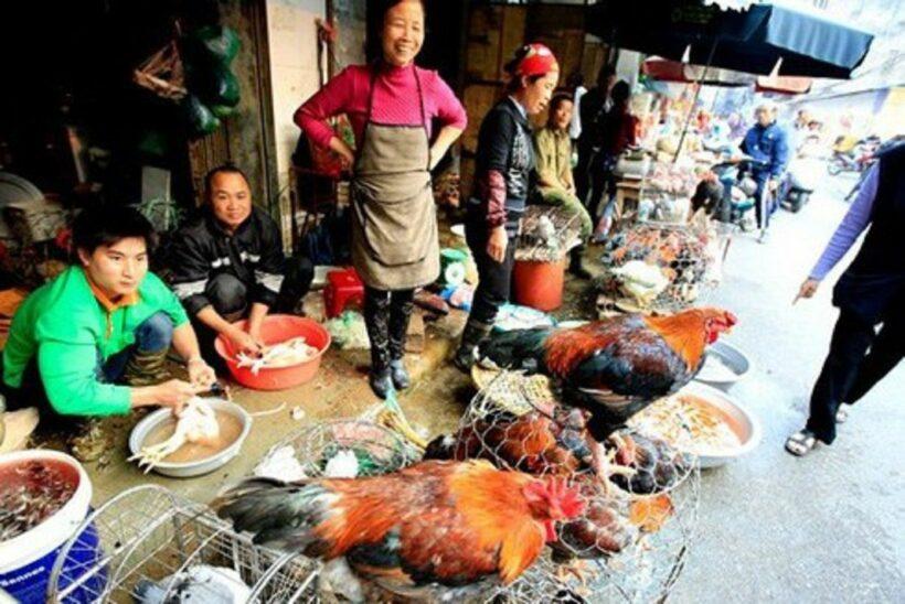Luật Chăn nuôi: Bắt đầu từ 2020, không được phép để vật nuôi chứng kiến đồng loại bị giết mổ   News by Thaiger