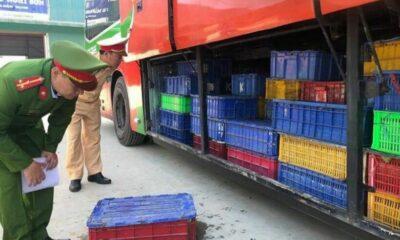 Phát hiện 5 tấn động vật rừng hoang dã bị giấu trong xe khách   Thaiger